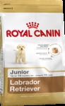 Labrador Retriever Junior (Лабрадор)