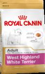 West Highland White Terrier Adult (Вест-хайленд-уайт-терьер)
